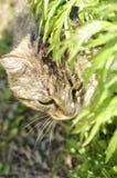 在四处寻觅的猫。 免版税库存图片