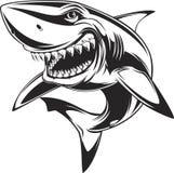 Белая акула Стоковые Изображения