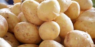 Φρέσκια οργανική πατάτα άνοιξη Στοκ φωτογραφίες με δικαίωμα ελεύθερης χρήσης