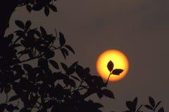 在日落的叶子剪影 免版税库存图片
