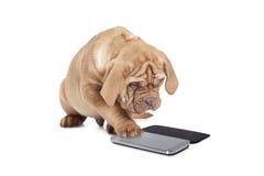 与手机的小狗 免版税库存照片