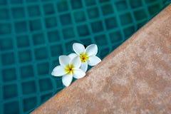 蓝色手段游泳池&白色热带花 免版税库存照片