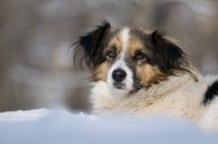 милая собака Стоковая Фотография