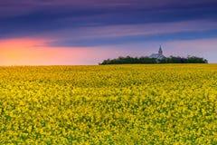 油菜籽,特兰西瓦尼亚,罗马尼亚的教会和领域在日出的 免版税库存照片