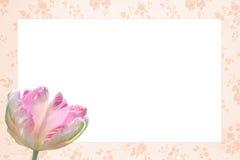 与三色美丽的郁金香的花的怀乡花卉框架 免版税库存图片