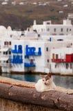 猫在希腊 免版税库存照片