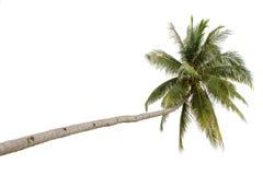 查出的棕榈树 图库摄影