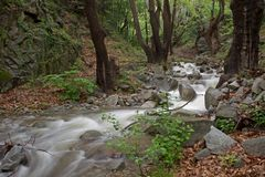 有结构树的河 库存照片