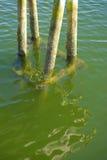Συσσωρεύσεις αποβαθρών στα σαφή καθαρά νερά στην ακτή της Νέας Αγγλίας Στοκ Εικόνα