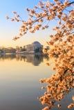 在樱花节日期间的杰斐逊纪念品 库存照片