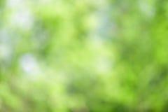 Зеленая абстрактная предпосылка природы леса Стоковая Фотография RF