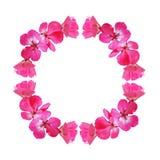 Ρόδινο πλαίσιο με τα λουλούδια γερανιών Στοκ Εικόνες
