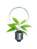 在灯电灯泡孤立里面的树新芽 库存照片