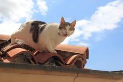 在屋顶的猫 免版税图库摄影
