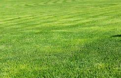 剪切新鲜的草坪 图库摄影