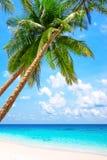 与棕榈树的热带白色沙子 免版税库存图片