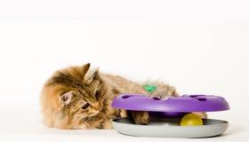猫他使用的玩具年轻人 免版税库存照片