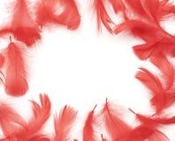 羽毛框架红色 免版税图库摄影