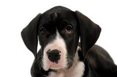 狗哀伤的甜年轻人 图库摄影