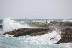 打破横跨岩石的海洋浪花,与鸟,在岩石中的野生生物,坎昆,墨西哥 免版税库存照片