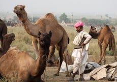 Пастух верблюда с верблюдами Стоковая Фотография