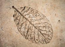 在水泥的浅浮雕叶子 免版税图库摄影
