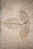 在水泥的浅浮雕叶子 免版税库存图片
