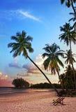 与剪影棕榈树的美丽的热带海滩在日落 免版税库存图片