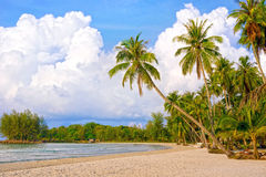 与许多棕榈树的热带手段 天堂自然 免版税库存照片