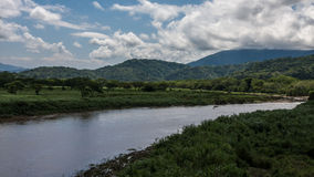 大鳄鱼在哥斯达黎加 库存图片