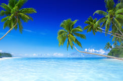 Тропический пляж рая с пальмой Стоковое фото RF