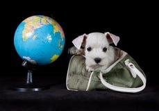 与地球和袋子的小狗 图库摄影