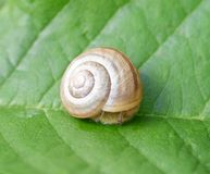 在叶子的蜗牛 免版税库存照片