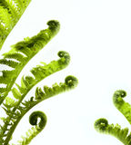热带密林作为与蕨绿色植物的一个空白的框架 库存图片