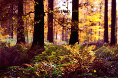 秋天森林背景 图库摄影