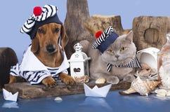 达克斯猎犬和英国猫 免版税图库摄影