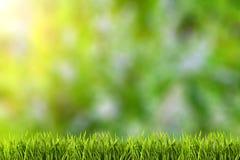 在绿草的抽象自然本底 免版税库存照片