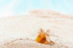 海滩含沙壳 免版税库存图片