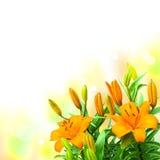 百合开花在白色背景的花束 免版税库存图片