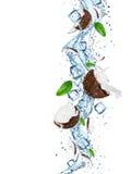 与水飞溅的新鲜的椰子 图库摄影