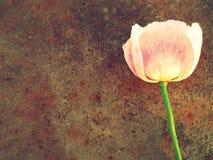 纹理金属和桃红色花背景 免版税图库摄影