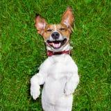 非常滑稽的狗 免版税库存图片