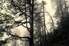 神秘的雾森林 免版税库存图片