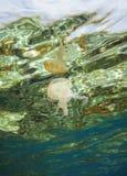 表面上反射的水下的水母 库存图片