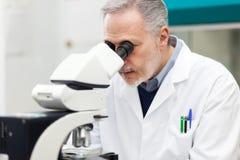 看通过显微镜的男性科学家 免版税图库摄影