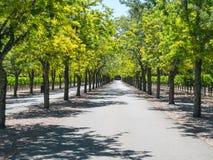 沿途有树的葡萄园车道 免版税库存图片