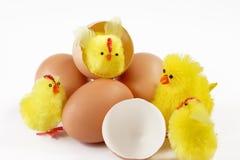 желтый цвет цыпленоков Стоковое Изображение
