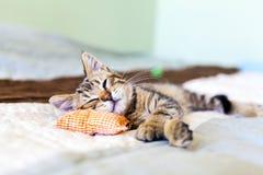 γατάκι μικρό Στοκ εικόνα με δικαίωμα ελεύθερης χρήσης