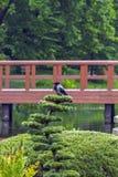乌鸦在日本庭院里 免版税库存照片