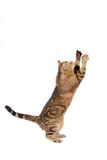 Кот играя на белизне Стоковое Изображение